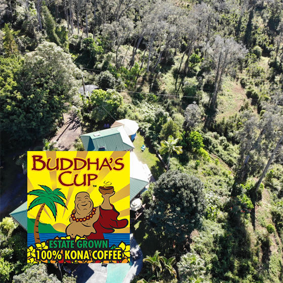 Domaine Buddha's Cup